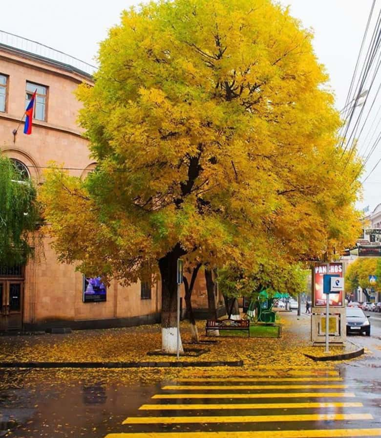 Yerevan in Autumn