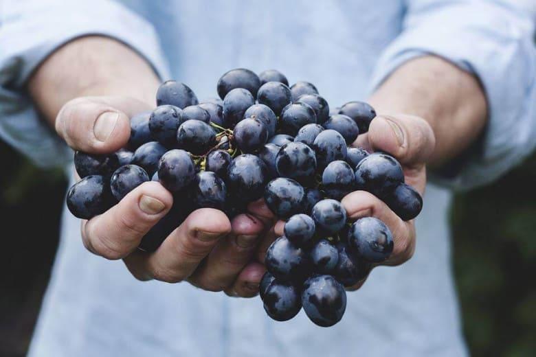 Armenian grape
