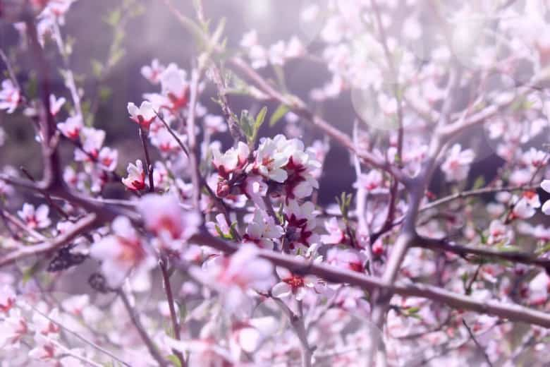 Springtime in Armenia